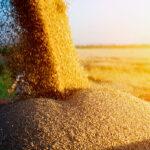Экспортеры предложили включить кукурузу в зерновой меморандум — Минэкономики
