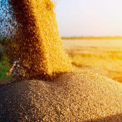 USDA снизило прогноз экспорта кукурузы из Украины в 2020-2021 МГ