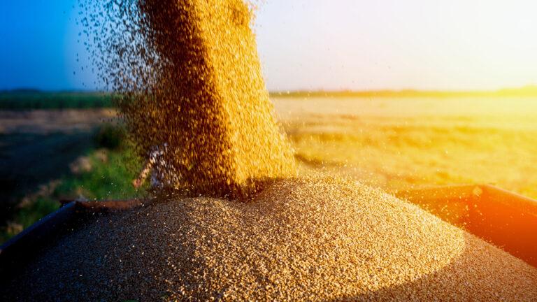 Экспортные цены на украинскую кукурузу снизились после пятилетнего максимума