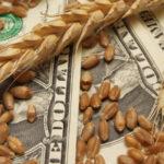 В январе-сентябре экспортировано 37,7 млн тонн зерна на $6,7 млрд — ГТС