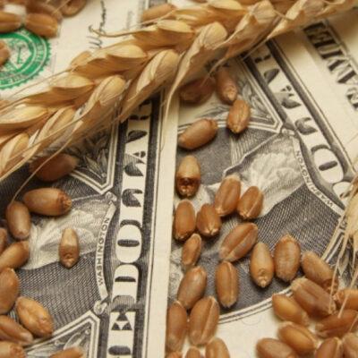 Кабмин поддержал ликвидацию зернового Гарантийного фонда