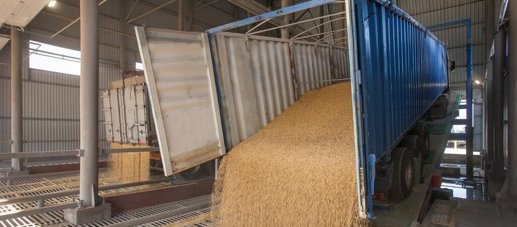 С начала сезона экспорт зерна уступает прошлогоднему объему на 26,2%