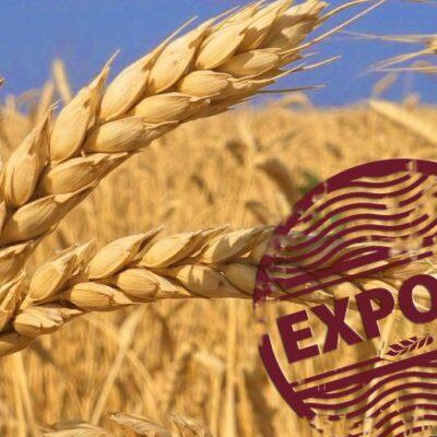 Украина открыла 8 новых экспортных рынков за полгода