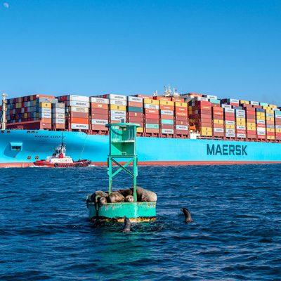 Maersk готовится перевозить американскую вакцину от COVID-19