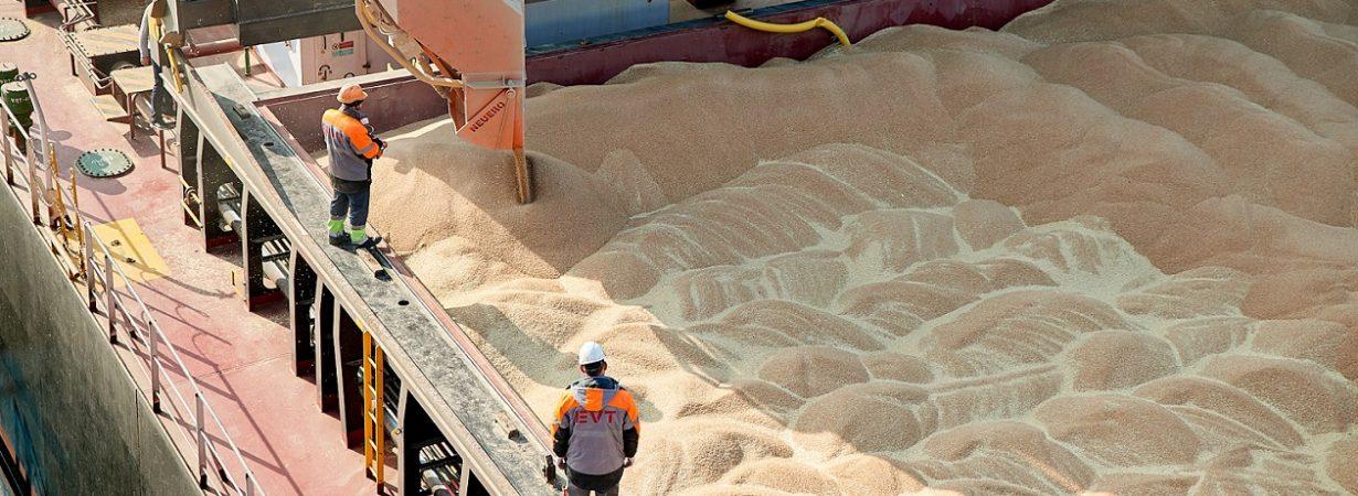 USDA повысило прогноз экспорта украинской пшеницы и ячменя
