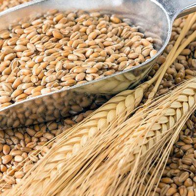 ГПЗКУ начала предзакупку зерна нового урожая