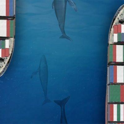Панамский канал ради защиты морских животных ограничил судоходство